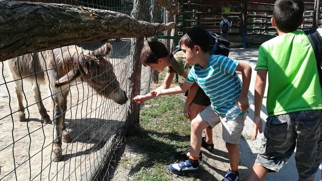 Три момчета от лятно езиково училище в KREG и магаре в зоологическа градина