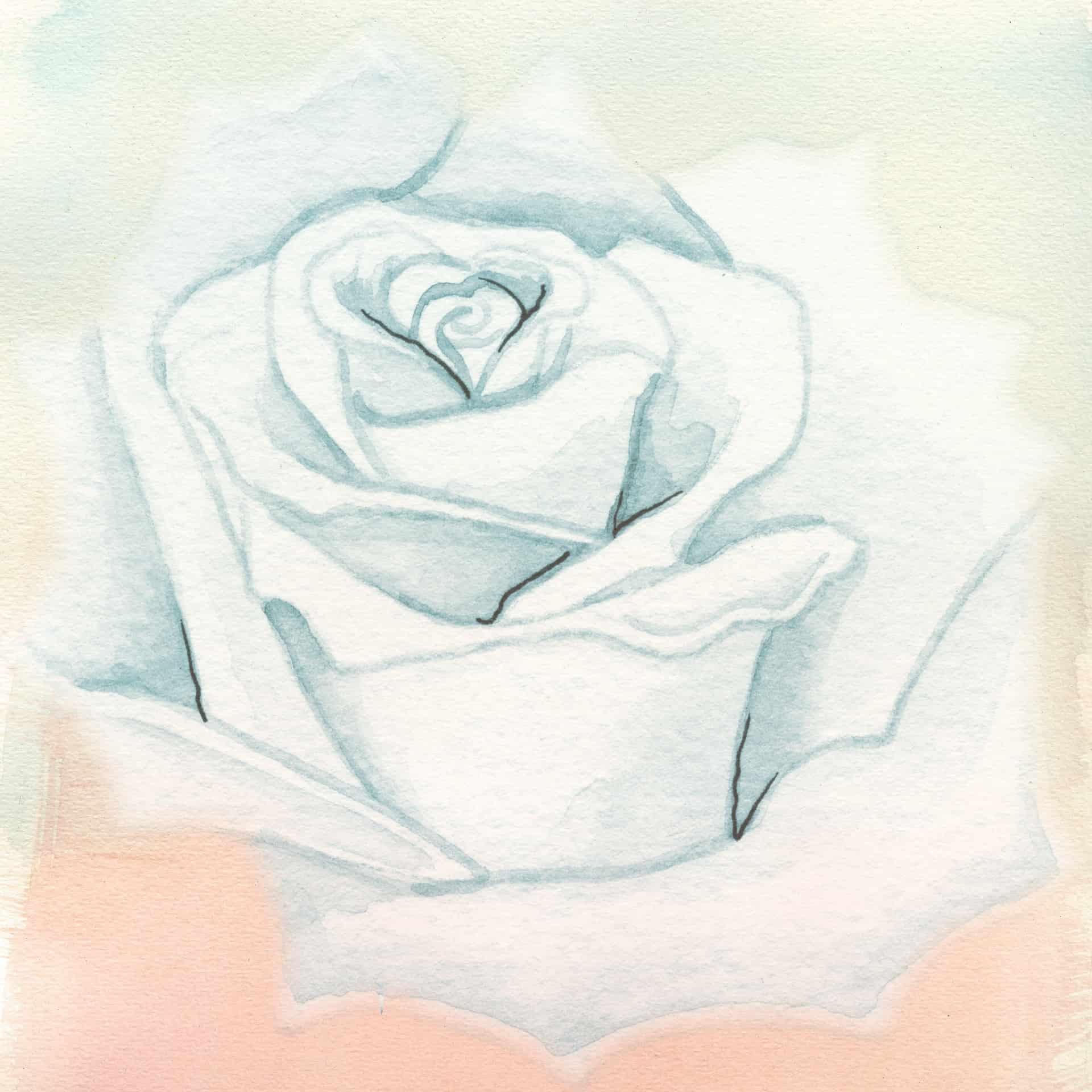 rose-2715653